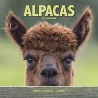 Alpacas Wall Calendar 2019 by Avonside
