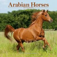 Arabian Horses Wall Calendar 2019 by Avonside