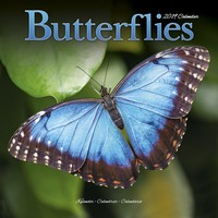 Butterflies Wall Calendar 2019 by Avonside