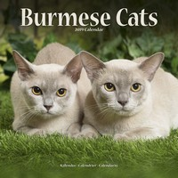 Cats - Burmese Wall Calendar 2019 by Avonside
