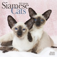 Cats - Siamese Wall Calendar 2019 by Avonside
