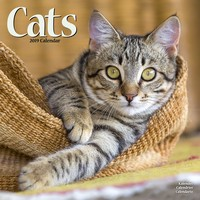 Cats Wall Calendar 2019 by Avonside