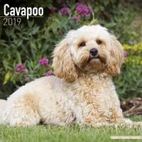 Cavapoo Wall Calendar 2019 by Avonside