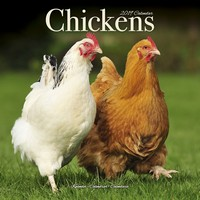 Chickens Wall Calendar 2019 by Avonside