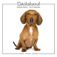 Dachshund Studio Range Wall Calendar 2019 by Avonside