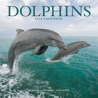Dolphins Wall Calendar 2019 by Avonside
