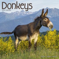 Donkeys Wall Calendar 2019 by Avonside