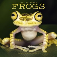 Frogs Wall Calendar 2019 by Avonside
