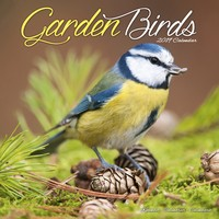 Garden Birds Wall Calendar 2019 by Avonside