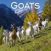 Goats Wall Calendar 2019 by Avonside