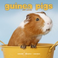Guinea Pigs Wall Calendar 2019 by Avonside