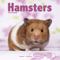 Hamsters Wall Calendar 2019 by Avonside