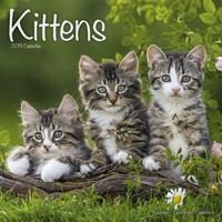 Kittens Wall Calendar 2019 by Avonside