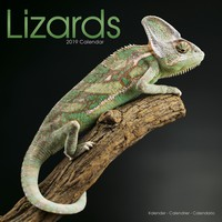 Lizards Wall Calendar 2019 by Avonside