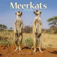 Meerkats Wall Calendar 2019 by Avonside