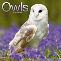 Owls Wall Calendar 2019 by Avonside