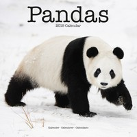 Pandas Wall Calendar 2019 by Avonside
