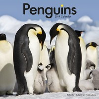 Penguins Wall Calendar 2019 by Avonside