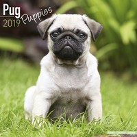 Pug Puppies Wall Calendar 2019 by Avonside