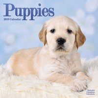 Puppies Wall Calendar 2019 by Avonside