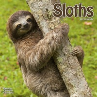 Sloths  Wall Calendar 2019 by Avonside