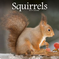 Squirrels Wall Calendar 2019 by Avonside