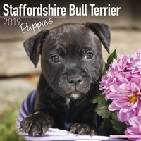 Staffordshire Bull Terrier Puppies Wall Calendar 2019 by Avonside