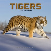 Tigers Wall Calendar 2019 by Avonside