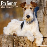 Fox Terrier (Wirehaired) Wall Calendar 2019 by Avonside