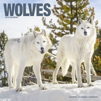 Wolves Wall Calendar 2019 by Avonside