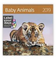 Baby Animals Wall Calendar 2019 by Helma