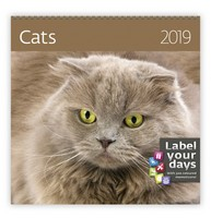 Cats Wall Calendar 2019 by Helma