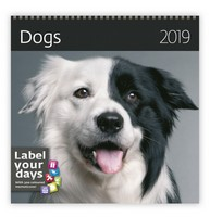 Dogs Wall Calendar 2019 by Helma