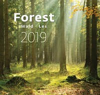 Forest Wall Calendar 2019 by Helma
