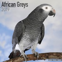 African Greys Wall Calendar 2019 by Avonside
