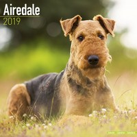 Airedale Wall Calendar 2019 by Avonside