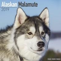 Alaskan Malamute Wall Calendar 2019 by Avonside