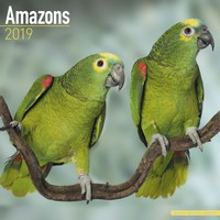 Amazons Wall Calendar 2019 by Avonside