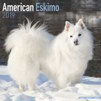 American Eskimo Wall Calendar 2019 by Avonside