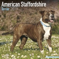 American Staffordshire Terrier Wall Calendar 2019 by Avonside
