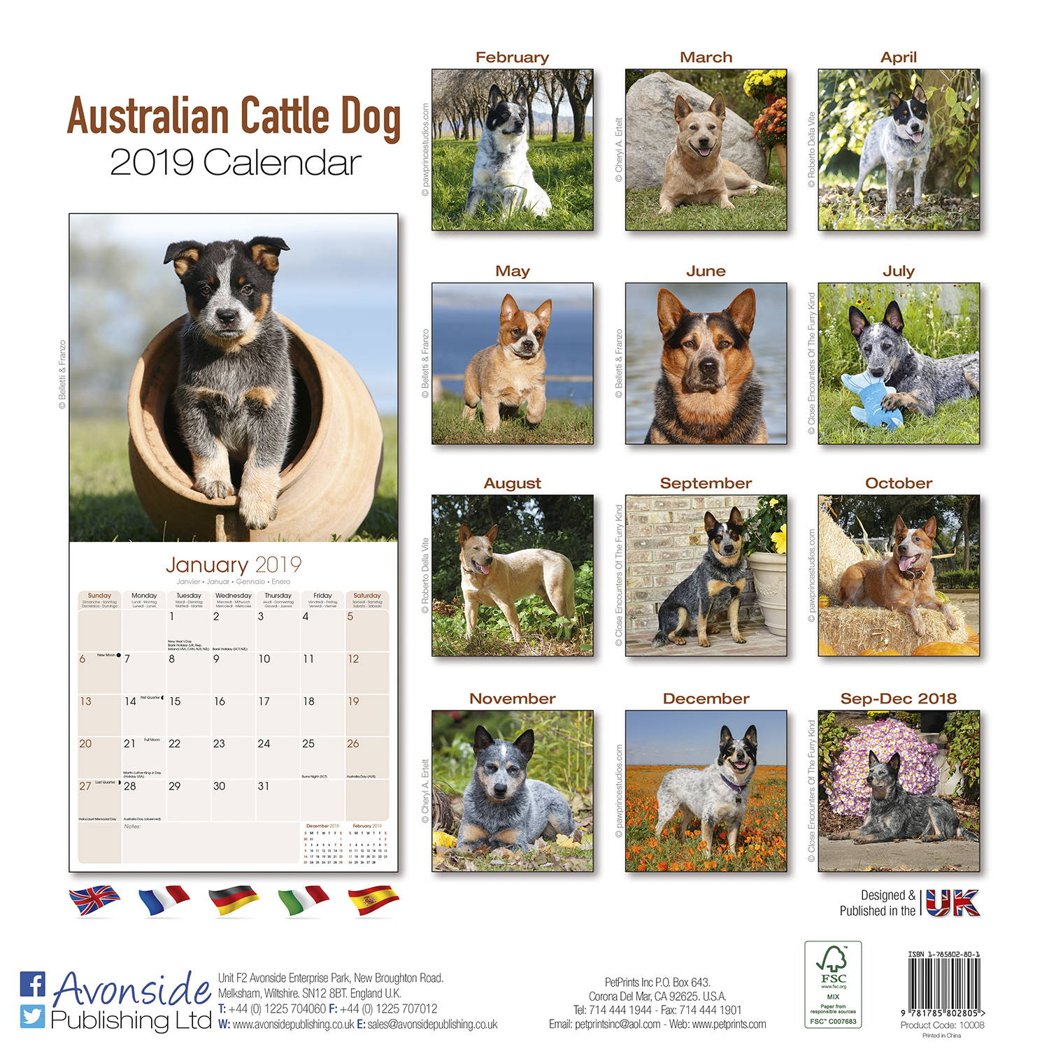 Australian Cattle Dog Calendar Dog Breed Megacalendars