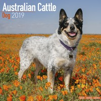 Australian Cattle Dog Wall Calendar 2019 by Avonside