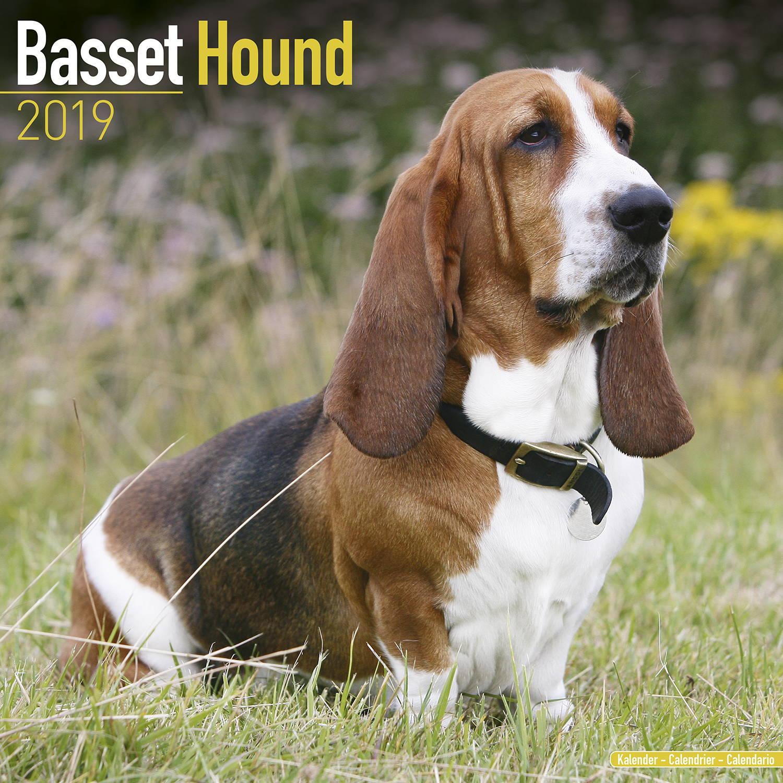 Basset Hound Calendar, Dog Breed Calendars