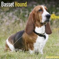 Basset Hound Wall Calendar 2019 by Avonside