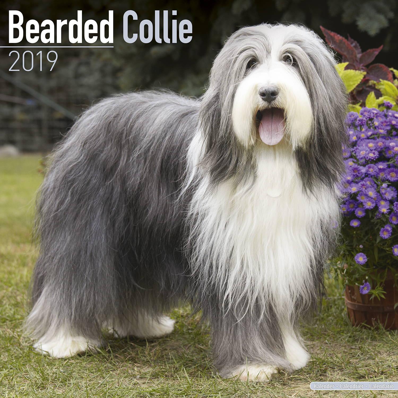 Bearded Collie Calendar, Dog Breed Calendars