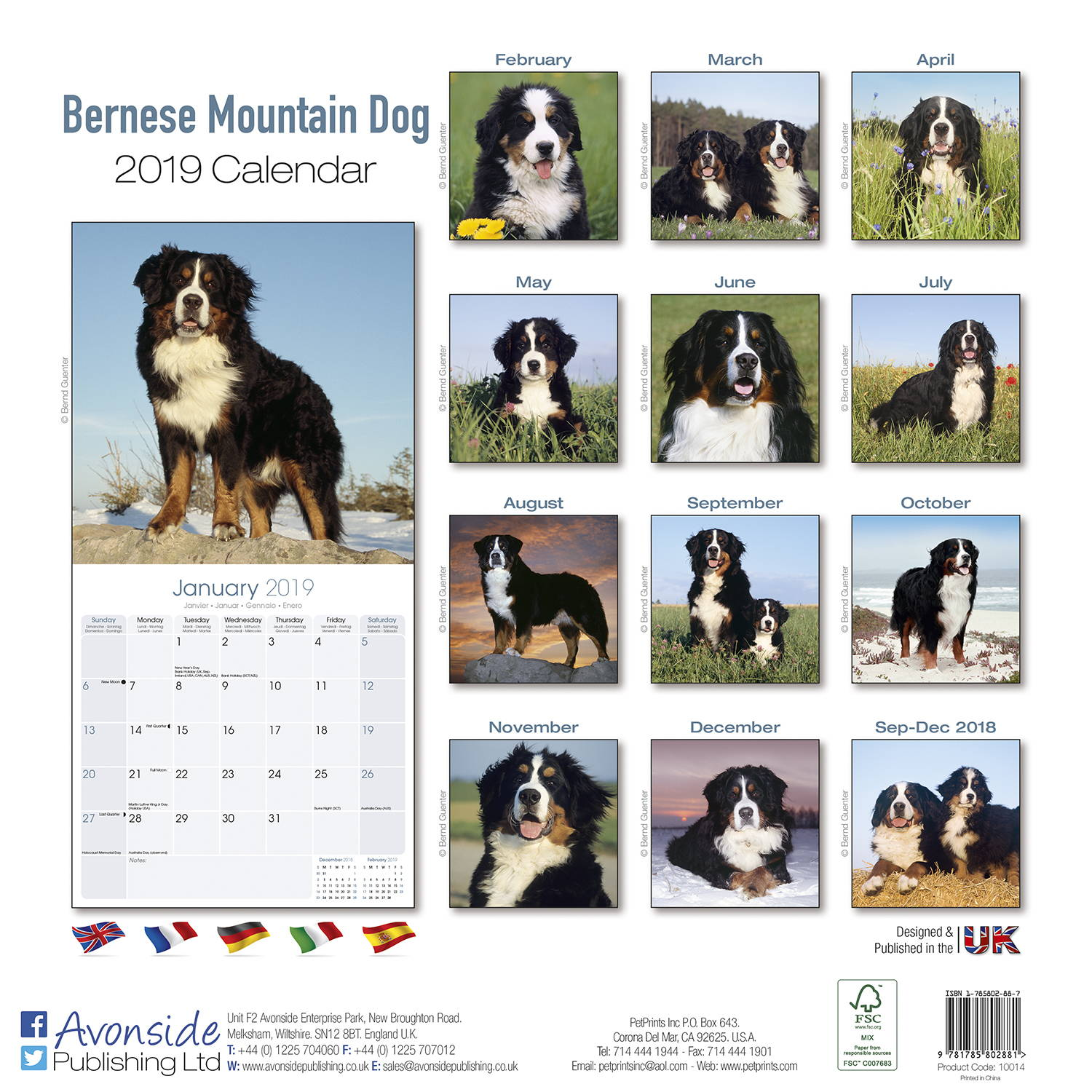Bernese Mountain Dog Calendar 2019 Pet Prints Inc