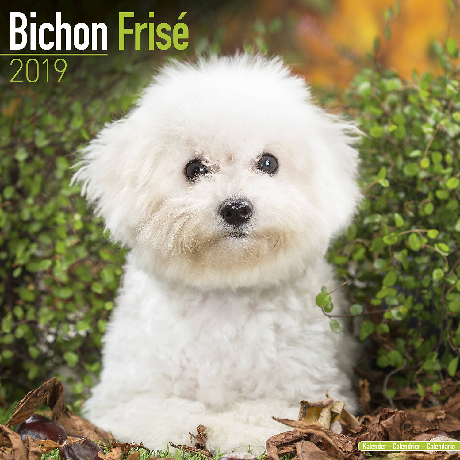 Dog Breeds Similar To Bichon Frise
