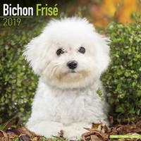Bichon Frise Wall Calendar 2019 by Avonside