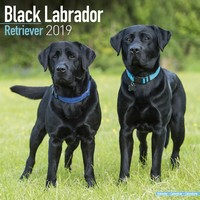 Black Labrador Retriever Wall Calendar 2019 by Avonside