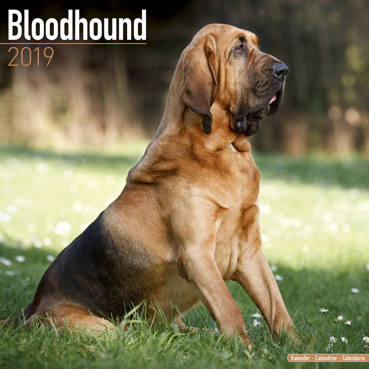 Bloodhound Calendar Dog Breed Calendars Megacalendars